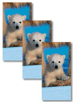 3051 - Polar bears - Handkerchief