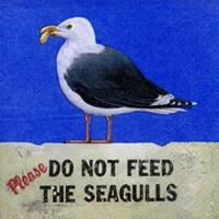 4232 – Gulls cant be fed