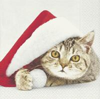4230 - Cat with Santa hat