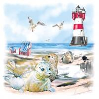 5373 - Seals on the beach
