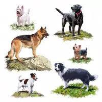 5535 - Dogs