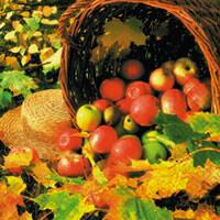 3956 - Apple basket and autumn colors
