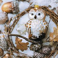 3930 - Owl in the winter