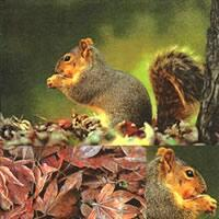 3795 - Squirrel in the forest