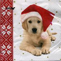 3525 - Puppy with Santa hat