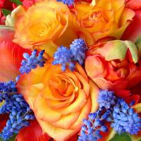 3380 - Orange Roses and Blue flowers