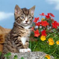 3090 - Kitten and flowers