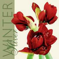 2977 - Amaryllis Winter
