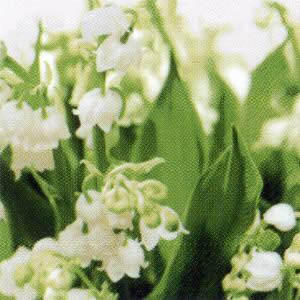 2632 - Lily of the valley
