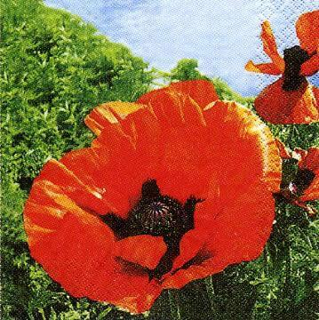 2454 - Red Poppies