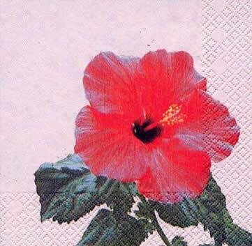 1902 - Red Hibiscus