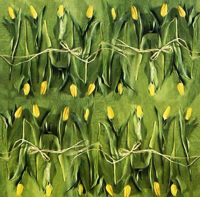 1752 - Yellow Tulips