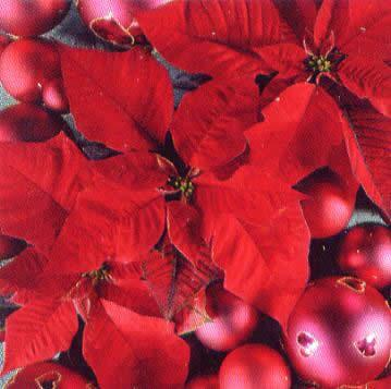 1563 - Red is the xmas colour