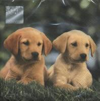 4520 - Twins - Puppies