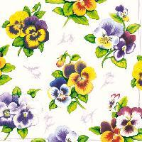 5049 - Pansy white