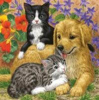 5123 - Cats and dog