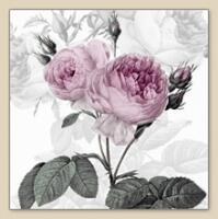 5389 - Beautiful pink roses