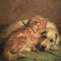 5537 - Dog and Cat