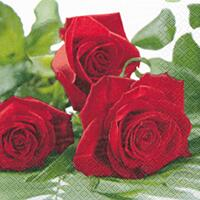 3864 - Red Roses
