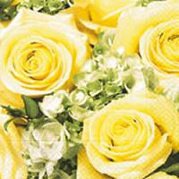 3397 - Yellow Roses