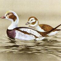 2754 - Ducks - Beige background