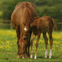 2417 - Horse and foal - Photo