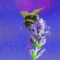 4227 -Bumblebee - Purple