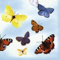 4225 - Butterflies Blue