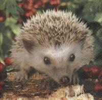 4429 - Hedgehog Bernie