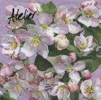 4440 - Apple flowers