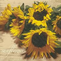 4542 - Sunflowers