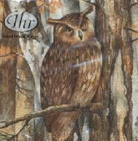 4797 - Forest owl