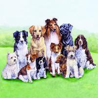 4935 - Pedigree Dogs