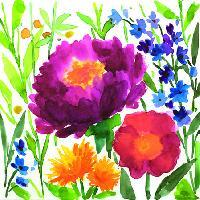 5016 - Aquarell Poppy