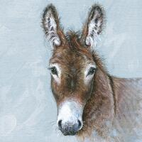 5092 - Young Donkey