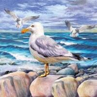 5334 - Seagulls on rocks