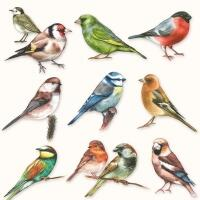 5365 - Collection of birds