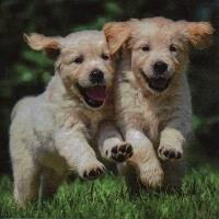 5436 - Happy Puppies