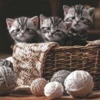 5443 - Striped Kittens