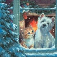 5437 - Westie and kittin looking out of Window