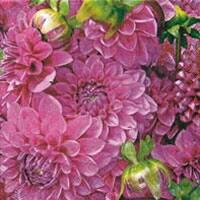 4046 - Dahlias - Pink/Purple