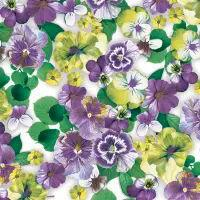 5545 - Pansy All Over Purple