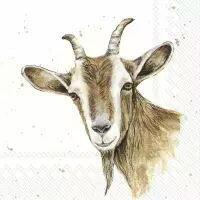 5555 - Farmfriends - Goat