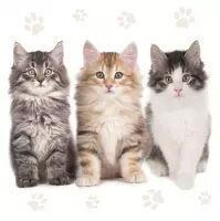 5614 - Three Beautiful Cats