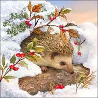 5648 - Hedgehog in snow