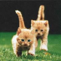3754 - Red kittens